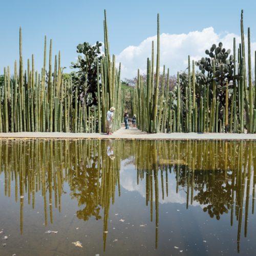 Jardín Etnobotánico de Oaxaca